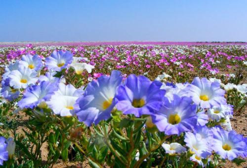 desierto-florido-tour