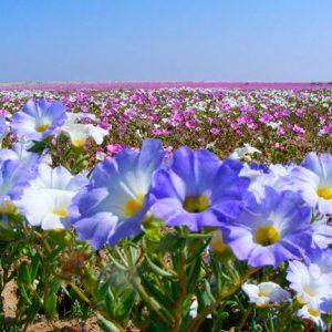 Tour Desierto Florido