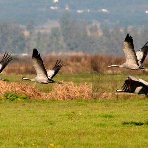 Tour Ornitológicos