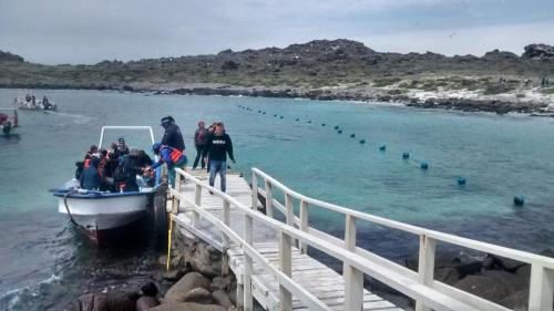 Chile inside Isla - 2