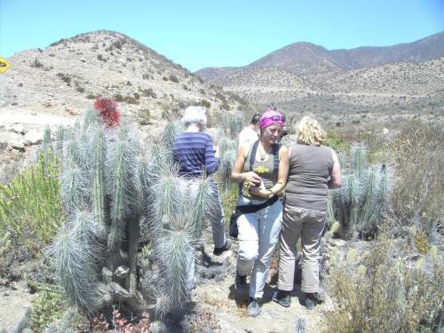 Cactus Camino a los Choros